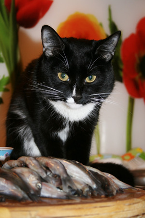 immobile: Black and white cat is sitting near the pile of fish on a bright background