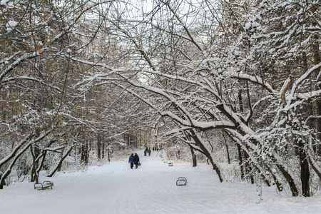 lean over: People  are walking  on the snow-covered winter park alley. The trees lean over the alley, as if to create an arch.