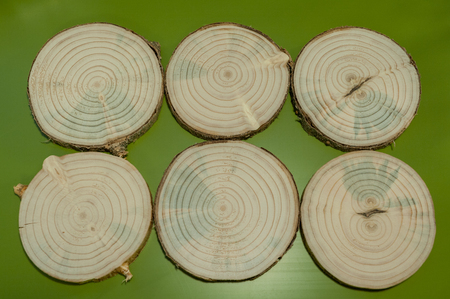 Six pine saw cuts with bark on green background. Stock Photo