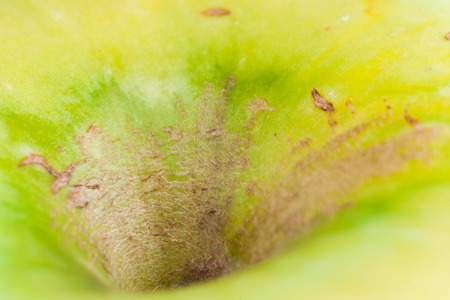 Abstract yellow-green picture. Macro shot part of apple -deepening of peduncle. Selective focus.