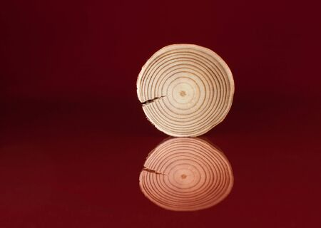 One polished pine saw cut stand on glossy surface and his reflection on red background.