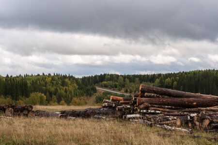 felled: Cloudy autumn landscape. Warehouse of felled trees, dry grass, forest and gloomy sky.