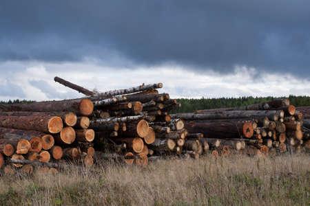 felled: Autumn landscape. Warehouse of felled trees and dry grass under gloomy overcast sky.
