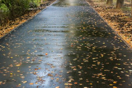 Receding into the distance wet asphalted walkway, covered with falled autumn leaves. Stock Photo
