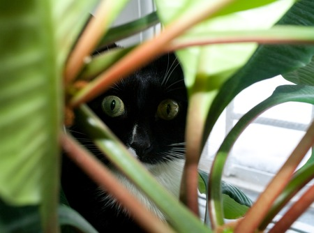 Cat is staring through green foliage with wide open eyes.