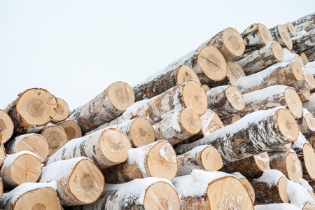 Bunch of many fresh sawn birch logs, covered with snow in winter. Diagonal side view shot. Stock Photo