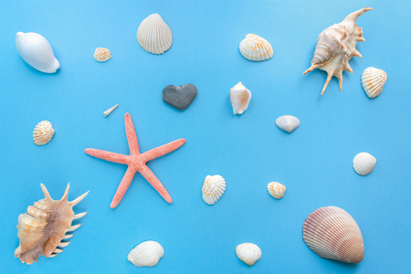 Flat lay set of sea shells of different sizes on a bright pastel blue background.