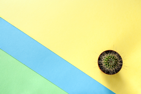 Abstract trendy color diagonal yellow-green-blue background with small cactus.