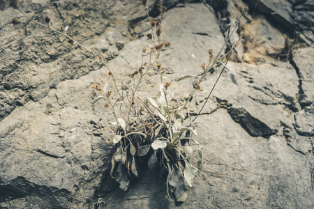 Small mountain plants growing in crevices among stones.