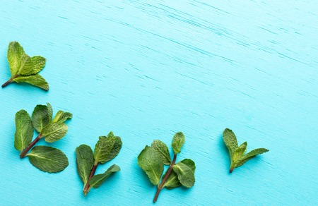 Five green mint sprigs are decomposed as arc bottom of turquoise background.