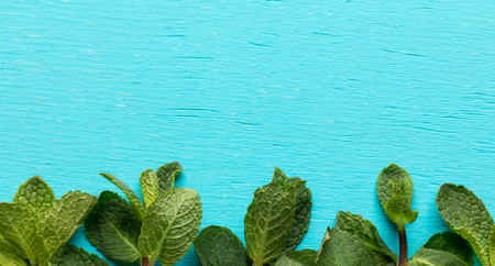 Green mint leaves bottom of turquoise background.