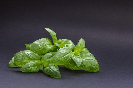 Green fresh Basil leaves on dark gray background. 写真素材