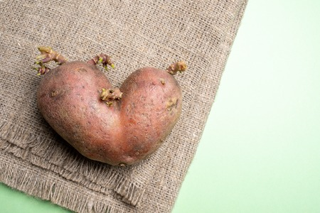 One ugly potato on burlap on green background.