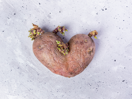 One potato with sprouts in center of grey concrete background.