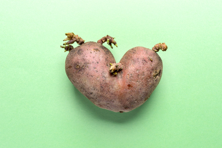 Non-standard ugly heart-shaped one potato on green background.