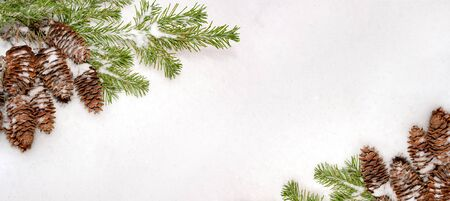 Christmas natural banner with green fir branches and cones on white snow.