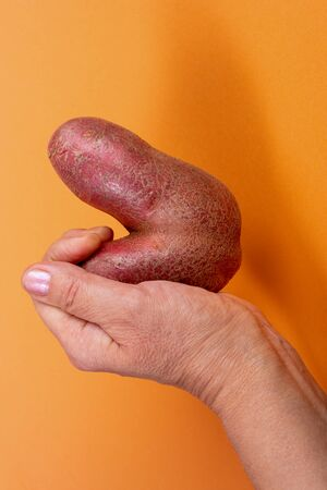 Female hand holding non-standard ugly V-shaped fresh raw potato on trendy yellow-orange background with shadow. Waste zero food and lifestyle concept. Reasonable consumption. Close-up.