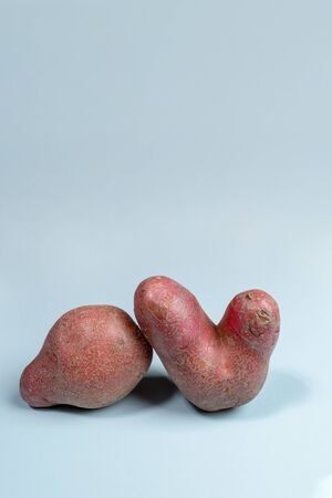 Two non-standard ugly fresh raw potato unusual form on light blue background. Waste zero food concept. Reasonable consumption. Plant based foods. Vertical orientation, copy space.