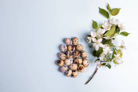 Heap of quail eggs laid out in form of large Easter egg with blooming white Apple tree branch on light blue background. Festive Easter background or greeting card. Top view, flat lay, copy space.