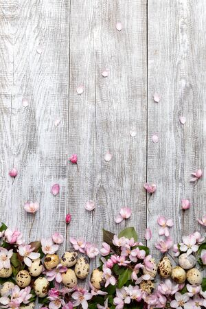 Festive Easter background of pink Apple tree flowers and petals and quail eggs on white painted wooden background. Top view, flat lay, copy space, vertical orientation.