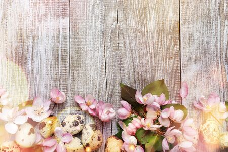 Festive Easter background of pink Apple tree flowers with green leaves and quail eggs on wooden background with bokeh. Top view, copy space.