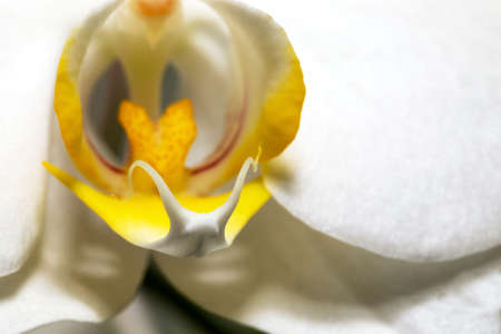 Blur macro shot of white Orchid flower with soft focus and space for text. Floral detail close up. Fine art image. Copy space. Stock fotó