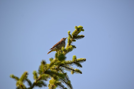 average: The average songbird Stock Photo