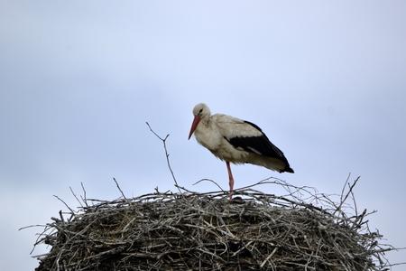observer: stork Stock Photo