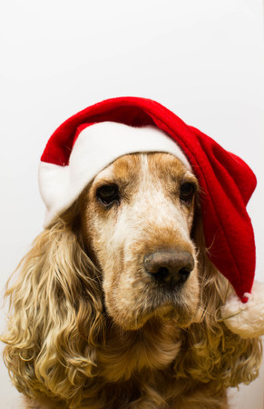 he goat: Dog in Santa Claus hat pets