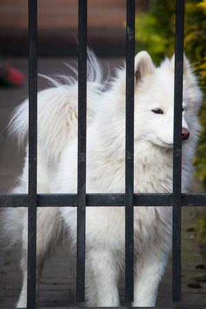 behind bars: White dog behind bars Stock Photo