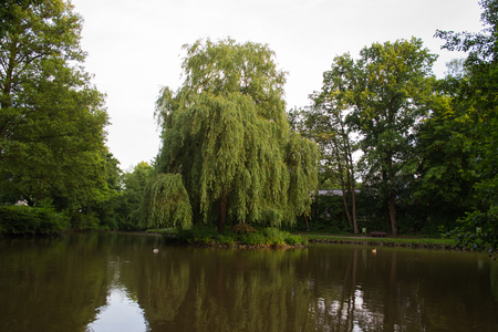Island of weeping willow Stock Photo