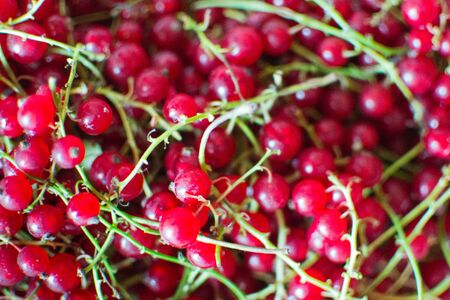 Fruit currants prepared for further processing