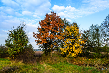 Trees in the colors of autumn Stock Photo
