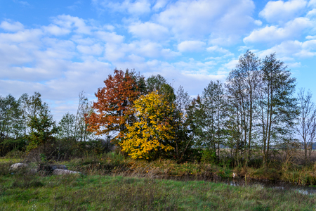 Trees in autumn color Stock Photo