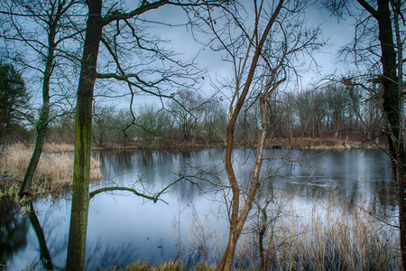 Early winter at the pond.