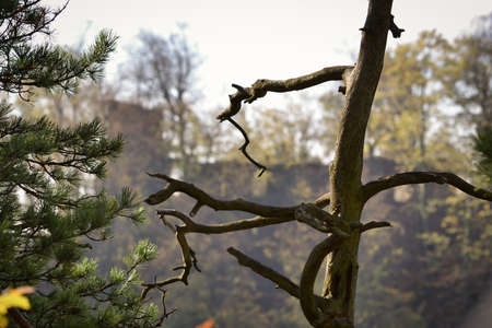 Branches of coniferous and deciduous trees in an autumn day.