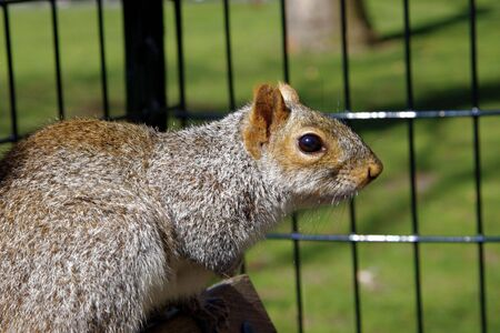 Squirrel Stock Photo - 2744537