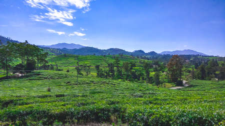 one of the tourist destinations located in the pangalengan area, Bandung Regency, with beautiful views of tea plantations that spoil the eyes of pangalengan , Indonesia