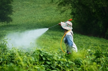 insecticide: Spraying pesticides  Stock Photo