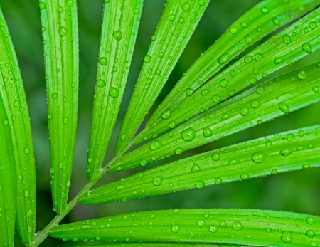 water drop on palm leaf photo