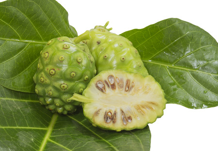 noni: Healthy fruit juice and drinks can be from noni fruit   Stock Photo