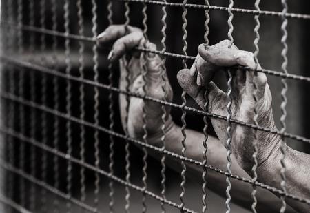 incarcerated: prisoner hands in jail