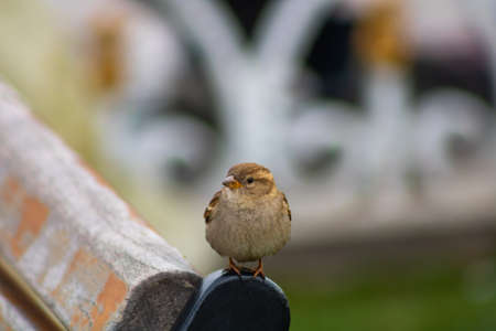 A sparrow on the bench