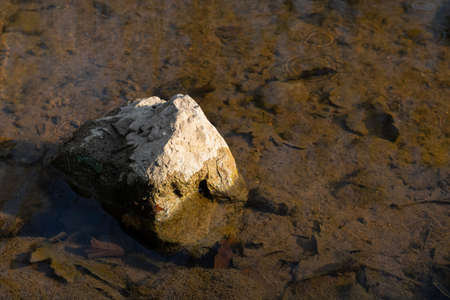 A rock in the puddle