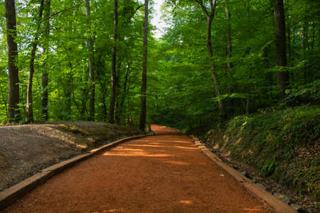 Running track in the forest