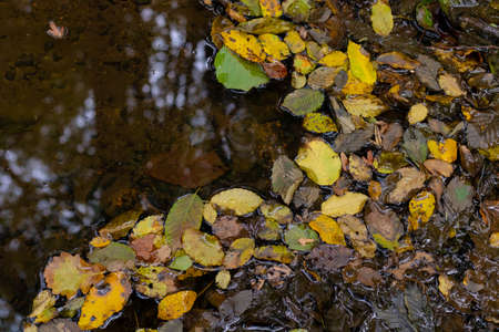 Fallen leaves on the puddle in the forest at autumn