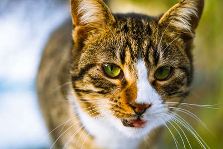 Portrait of the stray cat. Stray cats of Istanbul. Cat background photo. Stray animals.