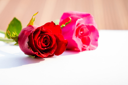 Red roses for Valentines Day isolated on white background, White background Valentine card represents love. Reklamní fotografie