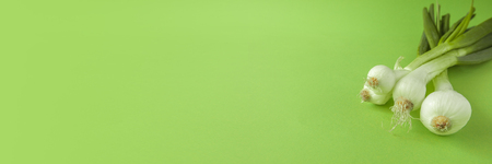 Green onion isolated on green background Banner