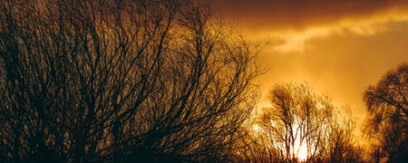 Hot yellow winter sunrise against the trees without leaves